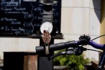 Ein Spatz sitzt auf einem Fahrradlenker.