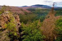 Aus Grün wird Braun - Waldschäden im Harz (Foto: Fährtenleser, CC BY-SA 4.0 <https://creativecommons.org/licenses/by-sa/4.0>, via Wikimedia Commons, bearbeitet)